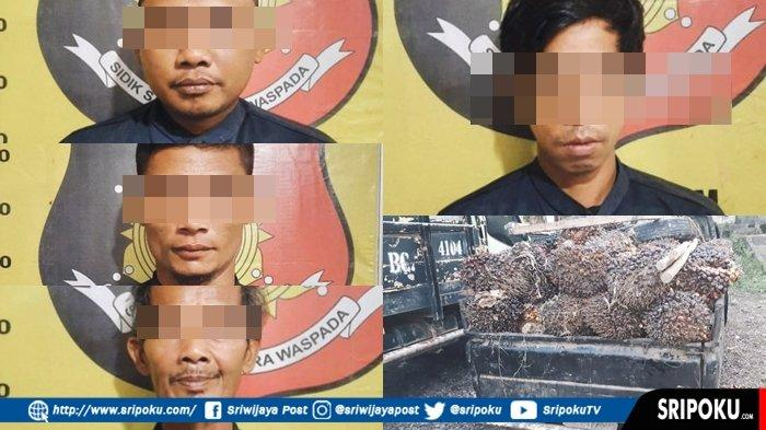 POLSEK Gunung Megang Tangkap 4 Pencuri Buah Sawit Milik PT SBAL, BB 95 Tandan Buah Segar Satu Pikap