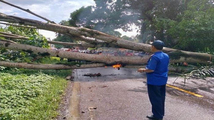 Pohon Petai Tumbang, Jalan Lintas Sumatera Muaraenim-Tanjungenim Satu Jam Macet Total