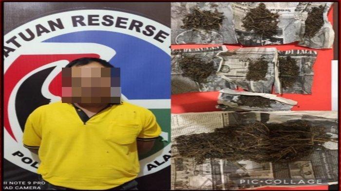 137 Gram Ganja Dibiarkan Terkapar di Halaman Rumah Saat Polisi Datang