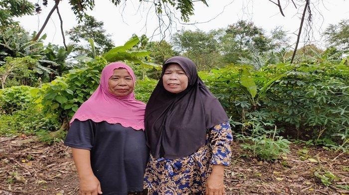 Hampir Panen tapi Ditebas Gara-gara Pembangunan di Pulau Kemaro, Pribumi Berharap Ada Ganti Rugi