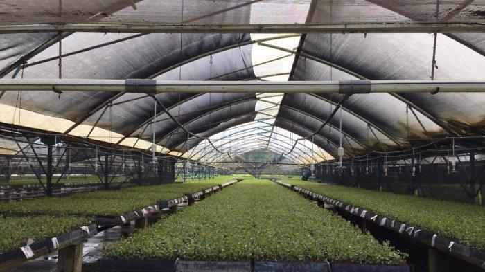 Bibit Berkualitas Berawal Dari Penyediaan Tempat Tumbuh Yang Baik Penyokong Lestari