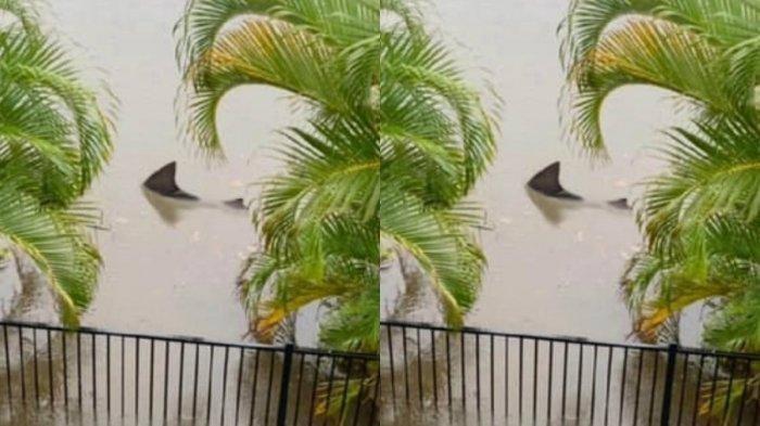 KEJEPRET KAMERA: Gempar Hiu Banteng Raksasa Masuk Pekarangan Rumah Warga Usai Banjir Bandang