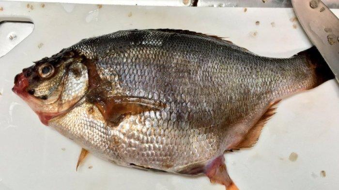 Pulang dari pasar Beli Ikan , Saat  Akan Disiangin Ibu Ini Kaget Keanehan Muncul pada Ikan Itu