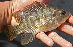 7 Jenis Ikan Ini, Sebaiknya Ibu Hamil Hindari