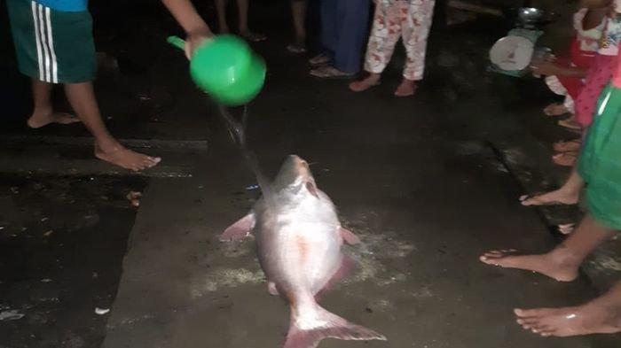 Warga Kecamatan Sanga Desa dan Sekayu Kabupaten Muba Panen Ikan Mabuk di Sungai Musi