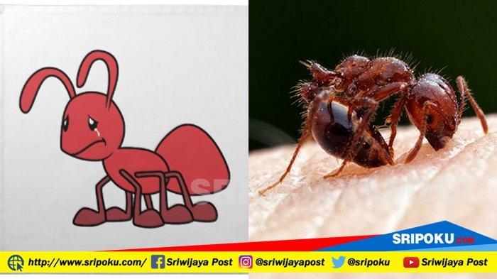 5 Hewan yang Bakal Kuasai Bumi saat Manusia Punah, Semut Ternyata Berada di Urutan Pertama