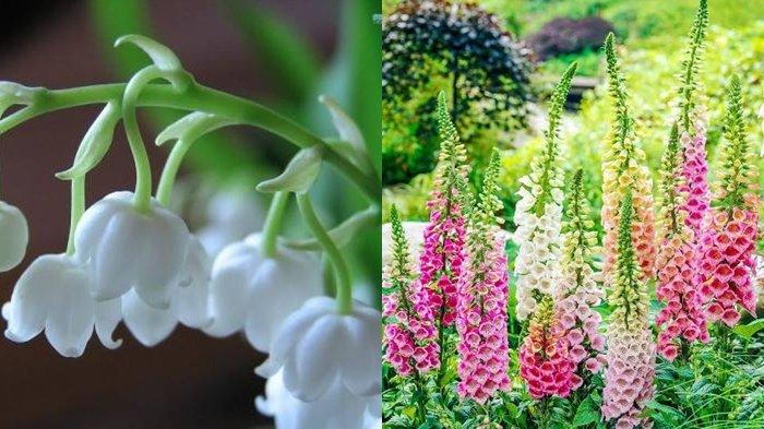 Tag Hydrangea Jangan Lihat Dari Bentuk Indahnya Yang Menawan Ini 5 Tanaman Hias Yang Cantik Tapi Beracun Sriwijaya Post