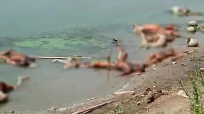 BURUNG Gagak dan Anjing Pesta Pora, Jenazah Covid-19 India Dibiarkan Saja Membusuk di Pinggir Sungai