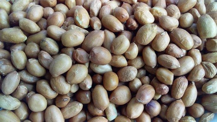 Kacang tanah.