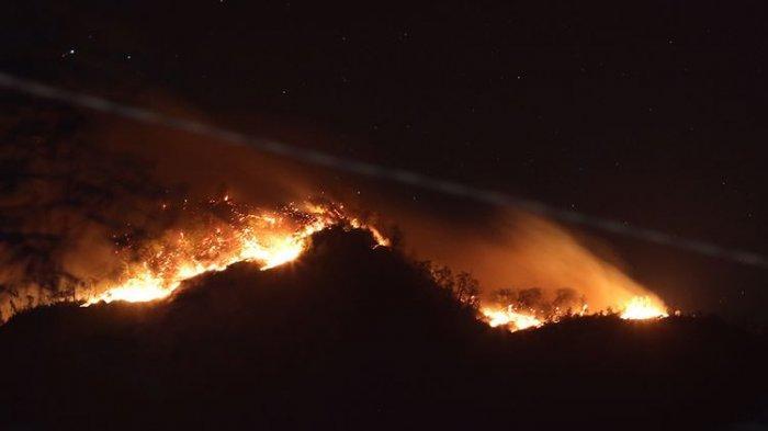 Presiden: Kebakaran Hutan 99 Persen karena Ulah Manusia
