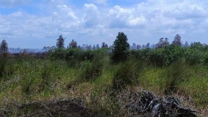Karhutla Terbesar Sepanjang 2021, Kebakaran Lahan Perusahaan di OKI Sudah Proses Pendinginan