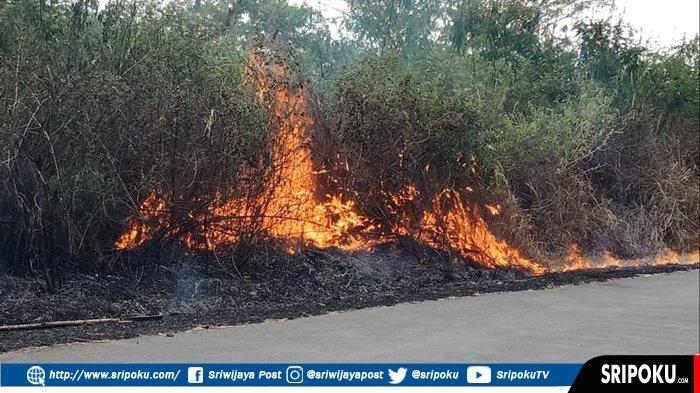 Rumput dan Tanaman Mulai Mengering Akibat Kemarau,Lahan Warga di Pagaralam Pun Mulai Terbakar
