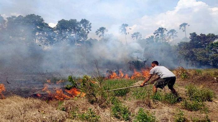 Sepanjang 2019, Terjadi 142 Kali Kebakaran Hutan dan Lahan di Lubuklinggau, Ada Peningkatan