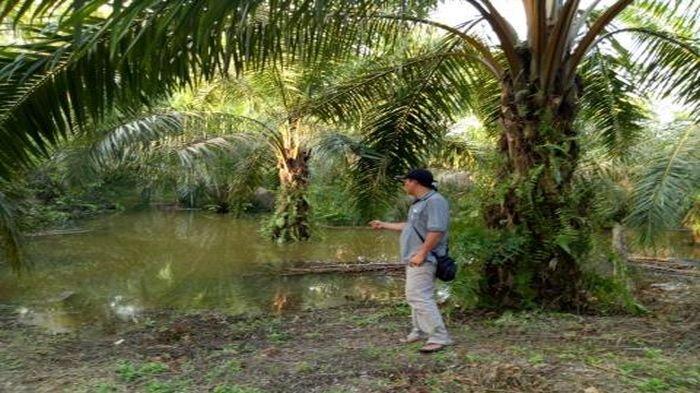 Pembangunan PLTU Sumsel I Mencemari Kebun Sawit dan Merusak Anak Sungai