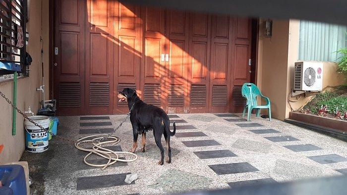 'Dijaga' Rottweiler, Sejak Viral 2 Triliun untuk Sumsel Anak Mendiang Akidi Tio Jarang di Rumah