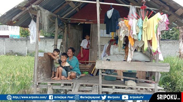 Keluarga di Kayuagung OKI Ini Hidup Memprihatinkan, Tinggal di Gubuk Sawah tak Tersentuh Bantuan