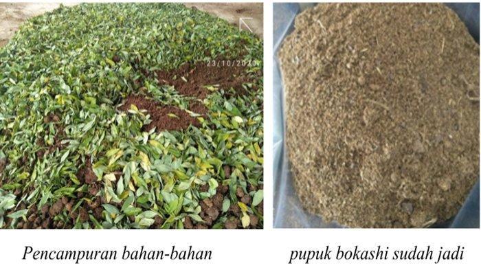 Kembalikan Kesuburan Tanah dengan Pupuk Organik Bokashi
