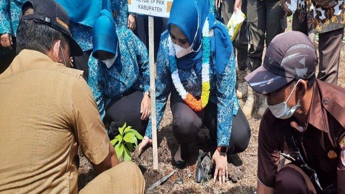 Ketua TP PKK Banyuasin dr Sri Fitriyanti Askolani menanam batang pohon dilingkungan kantor Camat Selat Penuguan Kabupaten Banyuasin.