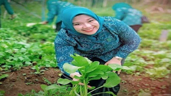 Petani di Lahat Cemas Gagal Panen Saat Musim Panen Kian Dekat, Ini Saran Kepala Dinas Pertanian