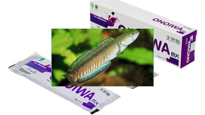 Khasiat Ikan Gabus,Termasuk Jenis di Sumsel dan 2 Tumbuhan Ini Bisa Obati Covid-19, Begini Kata Ahli