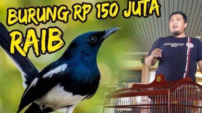 Kicau Mania Pontianak Serbu Kantor Garuda Indonesia, Bejat Kacer Rp150 Juta Raib dari Bagasi Pesawat