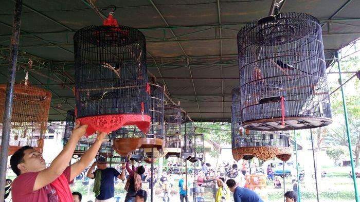Lomba Burung Berkicau Barisan Rakyat Cup 1 Agil Bara SF Pagaralam, Rebutkan Hadiah Puluhan Juta
