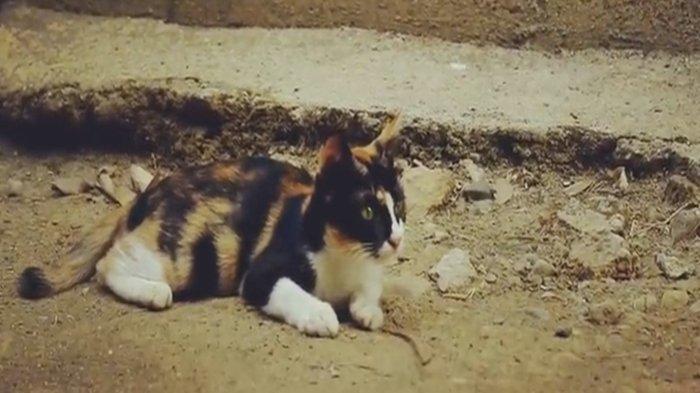 Jangan Buru-buru Diusir, Ternyata Inilah Pertanda Kucing Melahirkan di Rumah Kita, Kamu Beruntung!