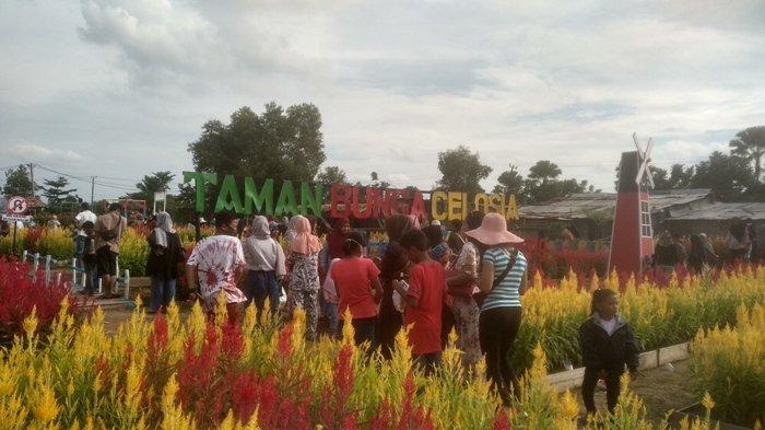 Taman Bunga Celosia Destinasi Baru Wisata di Palembang, Bisa Swafoto, Ada Kantin dan Ayunan