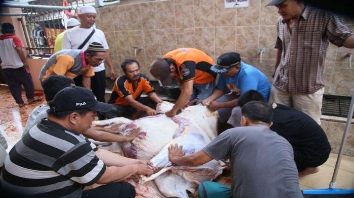 Panitia Masjid Darussaadah Komplek Kenten Sejahtera Berkurban 2 Sapi dan 9 Kambing dari Hasil Arisan