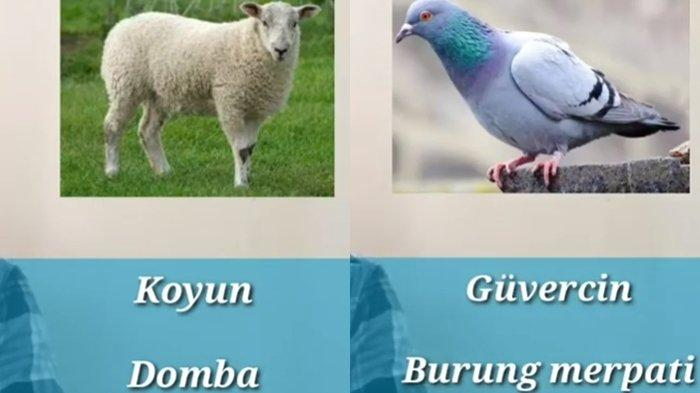 Nama-nama Hewan dalam Bahasa Turki Lengkap dengan Artinya, Cocok Bagi Seorang Pemula
