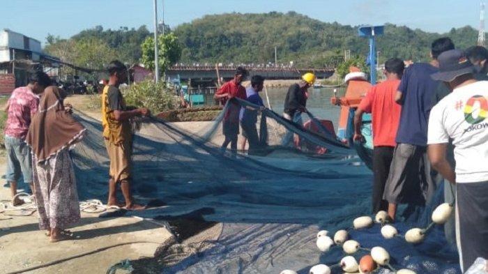 AKAL PINTAR Kawanan Lumba-lumba, Gigit Jaring Pukat, Bebaskan Ikan Kecil, Nelayan Bengong