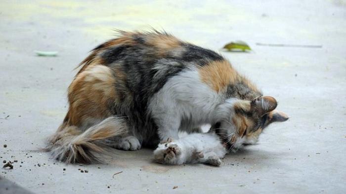 Netizen Menangis Saat Lihat Kucing ini Berusaha Hidupkan Anaknya Yang Mati Dibunuh Orang