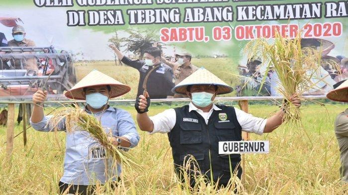 Semangati Petani, Gubernur Sumsel Herman Deru Naik Motor Hadiri Panen Raya di Rantau Bayur Banyuasin