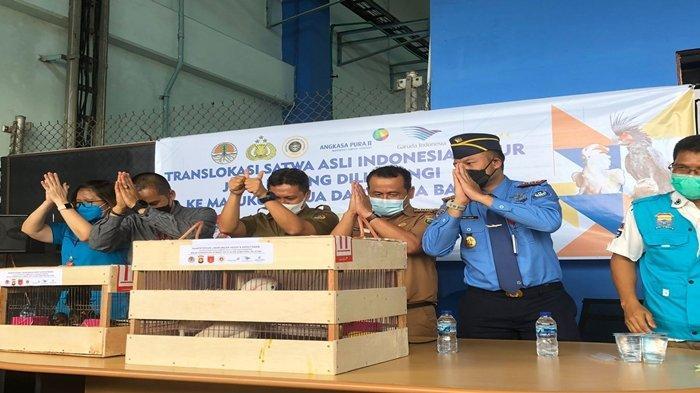 65 Hewan Dilindungi Diterbangkan ke Indonesia Timur dari Palembang, Nyaris Berakhir di Pasar Gelap