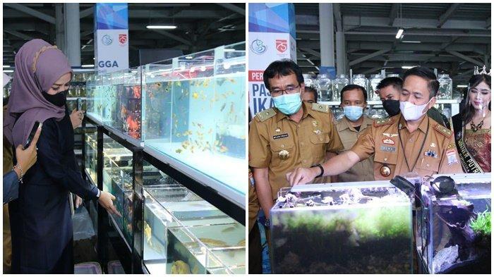 Pasar Ikan Modern Jadi Sentra Ikan Hias Pertama di Palembang, Ratu Dewa : Destinasi Wisata Baru