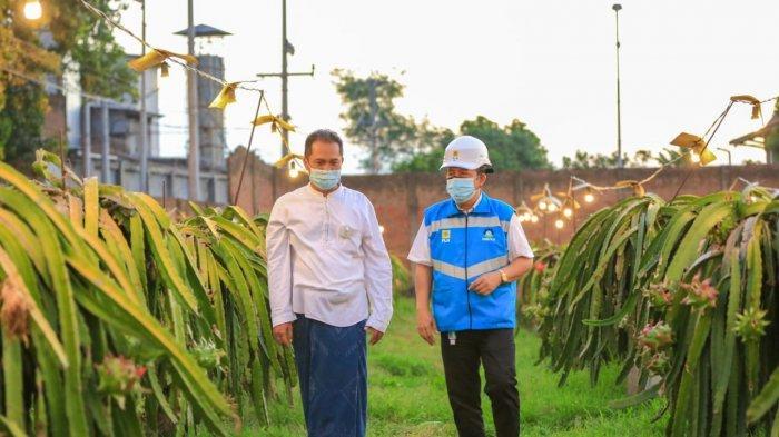 Senyum Agus Mulyohadi petani buah naga di Pacet, Mojokerto kian merekah. Keuntungannya naik hingga tiga kali lipat sejak memanfaatkan listrik PT PLN (Persero) melalui program Electrifying Agriculture
