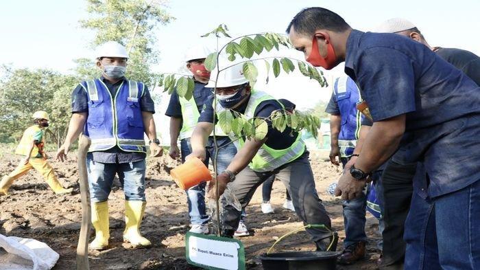 Peringati Hari Lingkungan Hidup, Lahan Eks Tambang PTBA Dihijaukan dengan Ribuan Pohon
