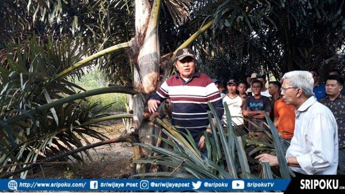 Herman Deru Ingin Kembangkan Pohon Aren Di Sumsel