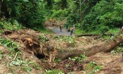 Dalam Waktu Sepekan, Terjadi Tiga  Bencana Pohon Tumbang dan Tanah Longsor di OKU Selatan