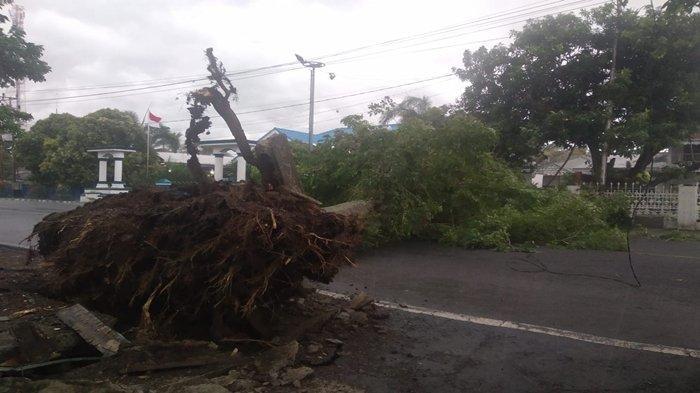 Pohon Tumbang di Depan Rumah Dinas Wabup Lahat, Beruntung Arus Lalu Lintas Tak Seramai Biasanya