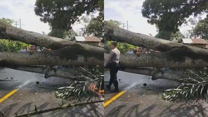 BREAKING NEWS: Sedang Terjadi, Pohon Tumbang di Jalan Lintas Sumatera Muaraenim, Macet Panjang