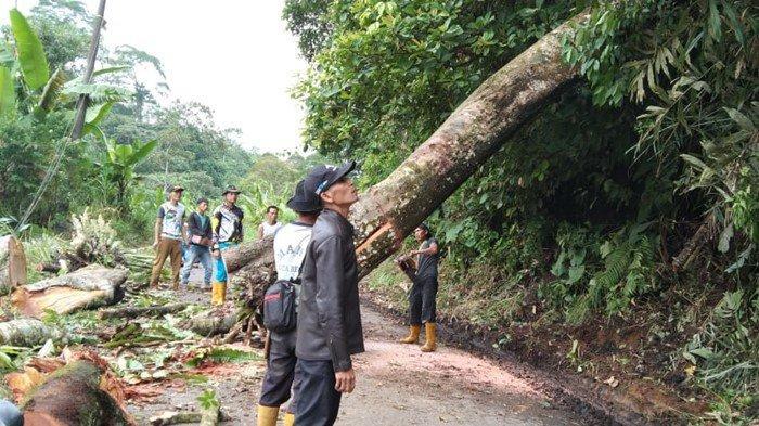Pohon Tumbang di OKU Selatan Bikin Warga Cemas: Nyaris Timpa Rumah Warga Hingga Buat Listrik Padam
