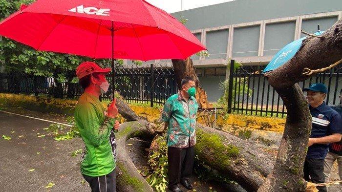 Hujan Deras di Palembang, Pohon Besar di Stadion Bumi Sriwijaya Tumbang: Sekda Sampai Turun Tangan