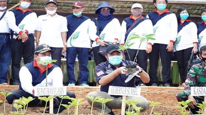 Penanaman Perdana Porang di Sumsel, Herman Deru Dorong Banyuasin Jadi Sentra Porang Selain Beras