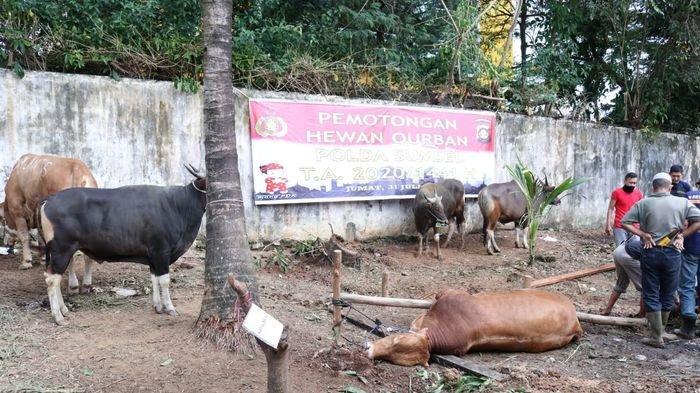 Idul Adha di Pagaralam, Pemkot Larang Dua Daerah Gelar Sholat Id, Daging Kurban Tunggu di Rumah Saja