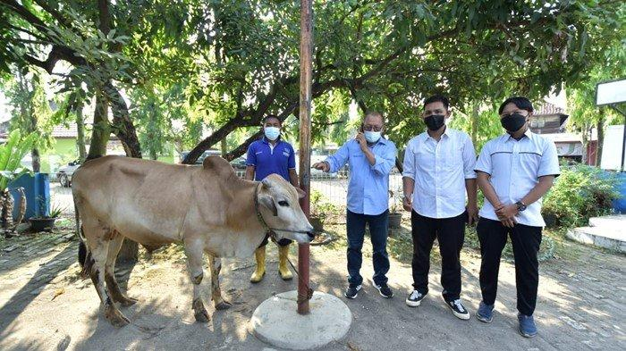 Semangat Berbagi, PT Bukit Asam Salurkan 149 Hewan Kurban di Berbagai Unit Perusahaan