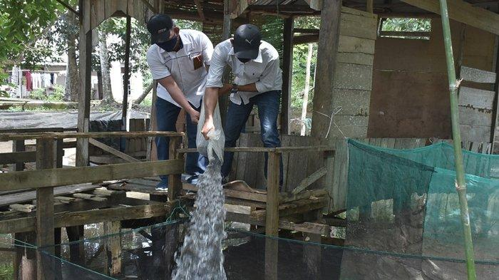 Sebagai salah satu bentuk kepedulian PT Pusri Palembang terhadap kesejahteraan warga di lingkungan sekitar perusahaan, Pusri memberikan sebanyak 10.000 (sepuluh ribu) bibit ikan lele pada Rabu (17/02/2021).