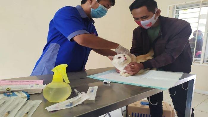 Siapkan 2000 Vaksin Gratis, Kejar Target Palembang Bebas Rabies di 2024