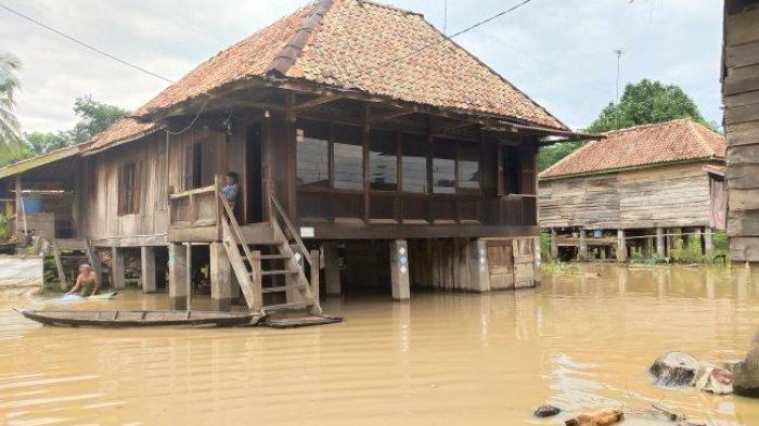 Ratusan rumah Desa Curup Kecamatan Tanah Abang Kabupaten PALI halaman bawah rumah mereka terendam banjir.