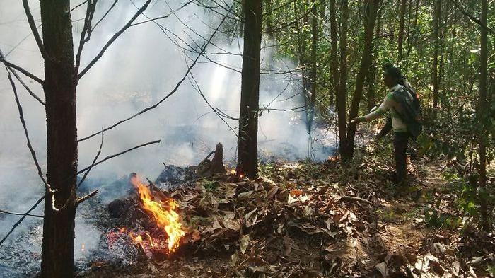 Praktek Pengelolaan Hutan Tanaman Industri yang Lestari